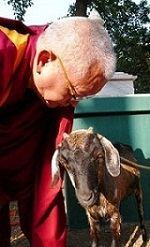 Advice from Rinpoche Jul 2009 - Animal Liberation